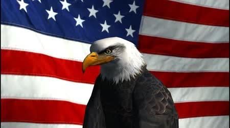 orel : bald eagle in front of us flag