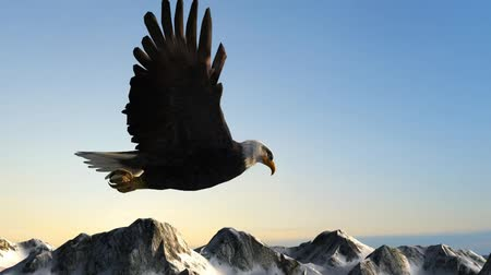 orel : Bald Eagle Flies over Mountains in the sunset