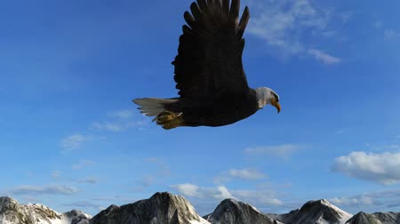orel : Bald Eagle Flies over Mountains