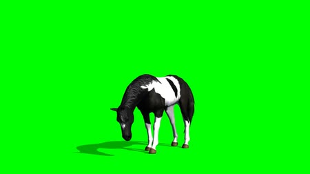 Pferd Weiden - green-screen Videos