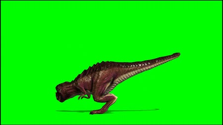 dinossauro : Dinosaur Tyrannosaurus T-Rex is attacking - green screen  Stock Footage