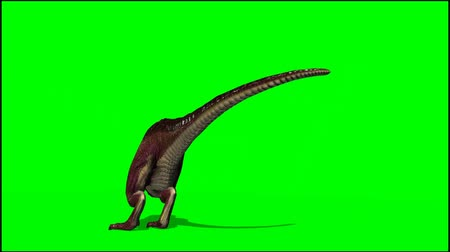dinossauro : Dinosaur Tyrannosaurus T-Rex dies and falls to the floor - green screen