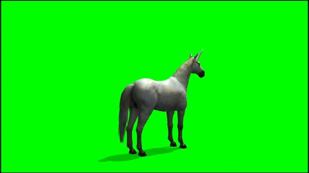 poník : Unicorn in motion -  greenscreen