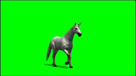 fantasia : Unicorn walks -  greenscreen