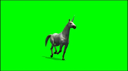 pónei : Unicorn runs -  greenscreen Stock Footage