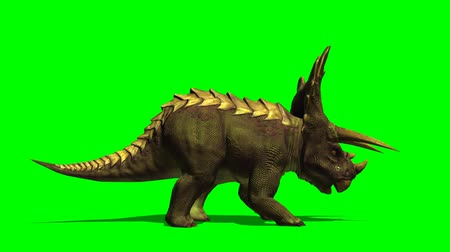 fossilised : Triceratops dinosaur eats - green screen