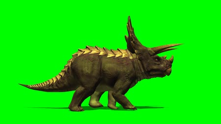 fossilised : Triceratops dinosaur walks - green screen