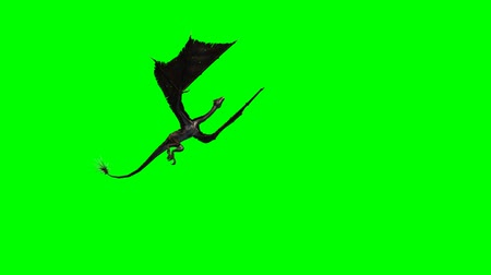 adem : Dragon in vlucht Close-Up tracking shot - groen scherm  Stockvideo