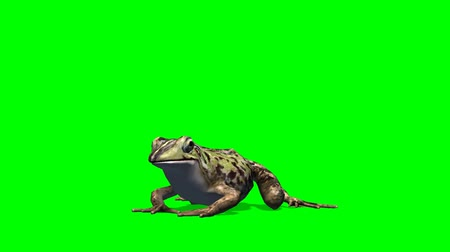 žába : the frog eat - green screen Dostupné videozáznamy