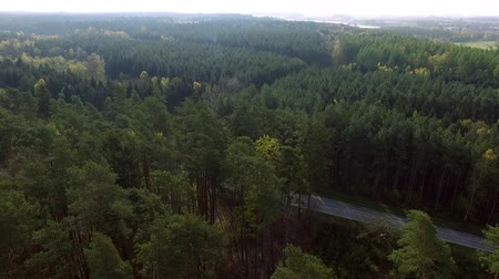 aerial view fly over the North European Forest  - dronen flight Stock Footage