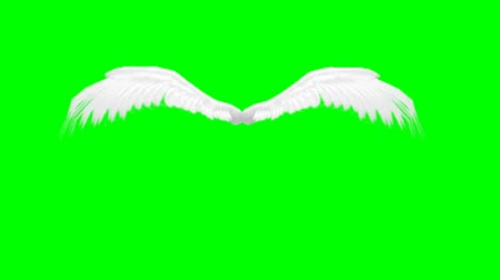melek : animated angel wings - green screen Stok Video