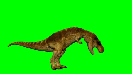 dinossauro : dinosaur T-Rex drinks - green screen Stock Footage