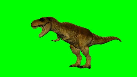 dinossauro : dinosaur T-Rex eats - green screen Stock Footage