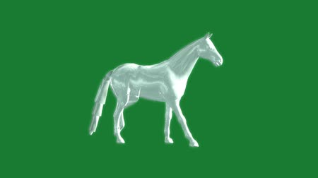 domestic animals : glass horse animation - green screen