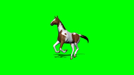 cavalinho : horse in galop - 2 different views - green screen