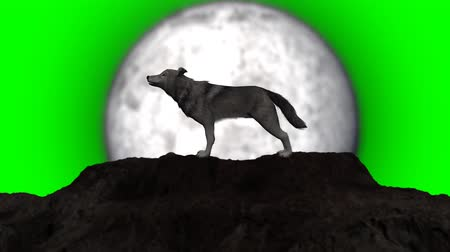 wilk : wolf howling - individual elements