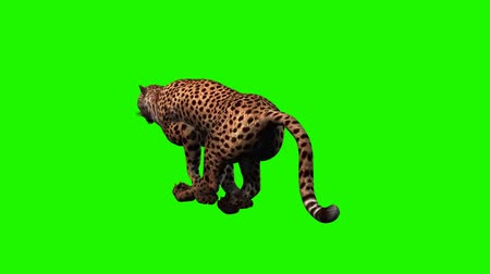 jump : cheetah runs - 3 different views