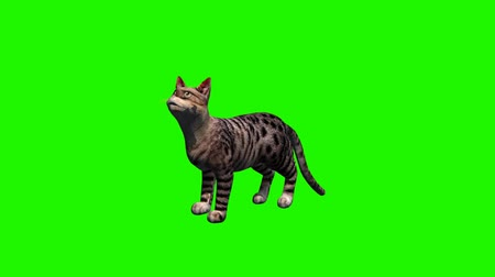 olhos verdes : cat meow - green screen
