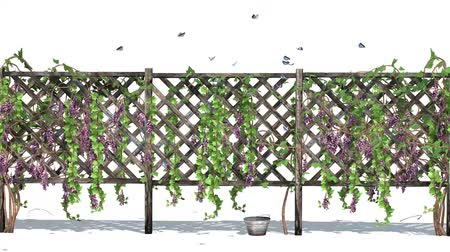hera : fence with vine tendrils in wind and butterflies - isolated on white background