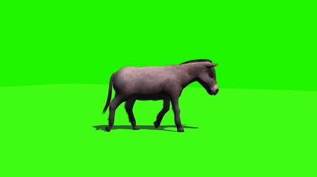 donkeys : Donkey goes with shadow 3 - green screen Stock Footage