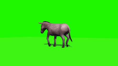 szamár : donkey walks with shadow - 3 different views - green screen