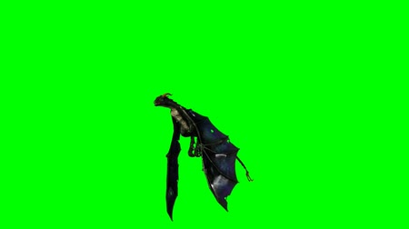 fantasia : flying dragon wyvern - schermo verde Filmati Stock