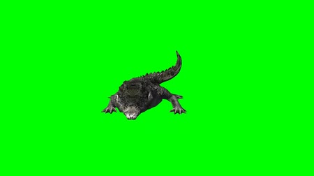 dravec : crocodile eats - 3 different views - green screen Dostupné videozáznamy