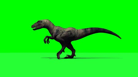 dinossauro : dino velociraptor walk - 3 different views - green screen Stock Footage