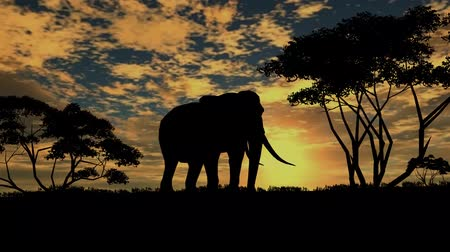 fil : elephant sillouette on sunset background