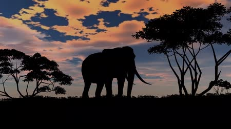reserva : elephant sillouette on sunset background