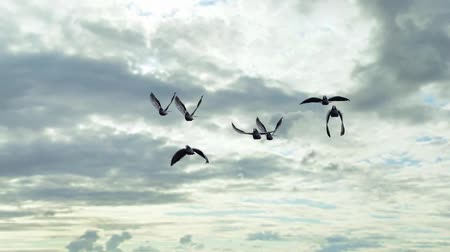 small group of animals : small group of pigeons flying on sky