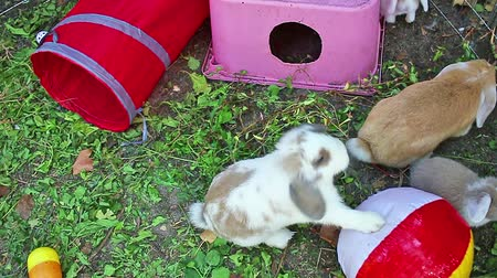 Rabbit playground in garden. Rabbits playing. Wideo
