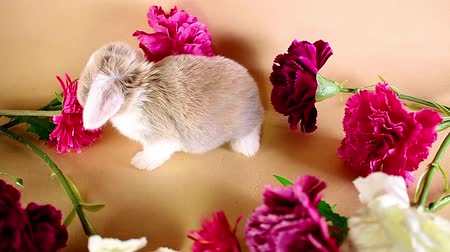Spring flowers bunny lop baby kit rabbit