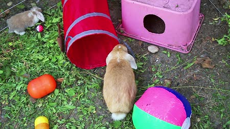 Rabbit playground outdoor play time animals pets Stock Footage