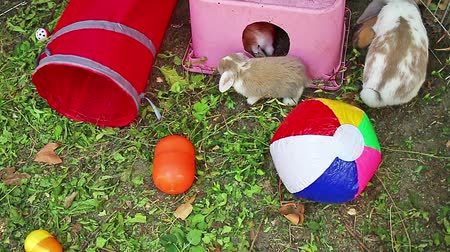 Rabbit playground outdoor play time animals pets Stok Video