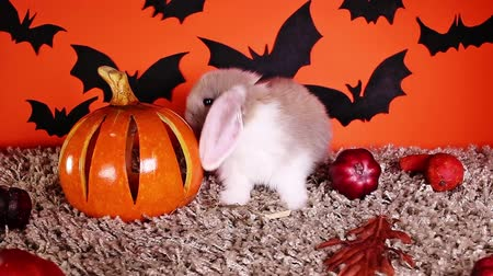 Halloween animals. Rabbit bunny DIY bat background. Stok Video