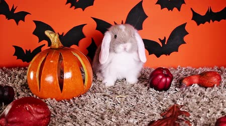 Halloween animals. Rabbit bunny DIY bat background. Stock Footage