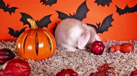 Halloween DIY decor background with rabbit pumpkin bat