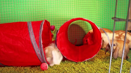 mbps : Tunnel Pet tube indoor playground rabbit toy. Lop cat toys