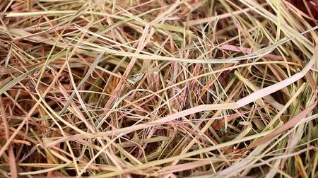 Hay straw rabbit food grass