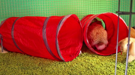 gif : Indoor rabbit pet cage playground tube tunnel