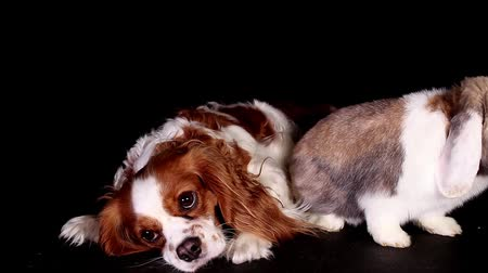 gif : Rabbit dog together pets animals sibling rivalry sad puppy Stock Footage