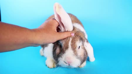 mbps : Petting bunny rabbit animal ear massage cute lop