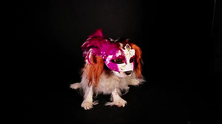 Party dog pet mask sylvester new year celebration