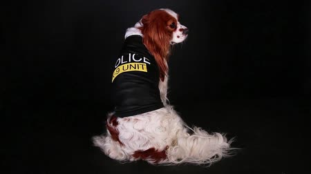 mbps : Police dog pet k9 working service trained puppy halloween costume