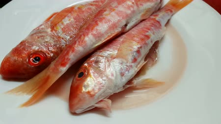 surmullet : Red fresh mullets on a white plate. Raw striped red mullet fish (surmullet).