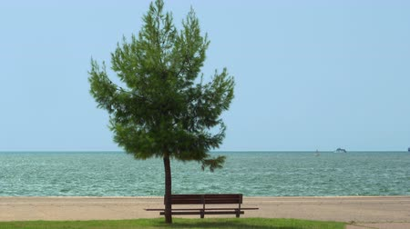 A bench under a tree at a city waterfront. Day view of an empty wooden bench under a green tree before sea blue horizon at Thessaloniki, Greece renovated waterfront at Thermaikos Gulf.