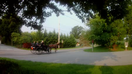 Пенсильвания : Gordonville, Pennsylvania, August 2018 - Amish Transportation Type Amish Horse and Open Wagon Стоковые видеозаписи