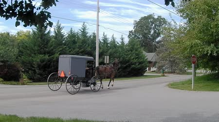 Amish Transporttype Paard en wagen Stockvideo