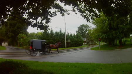 Amish Transport Type Paard en Buggy in de regen